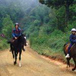 horseback safaris south africa