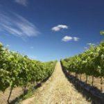 Top honours for SA wine estate