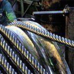 SA state steelmaker one step nearer