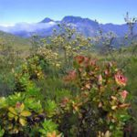 Cape Town launches reserves guide