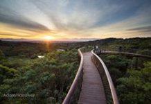Kirstenbosch is world's Garden of the Year