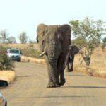 Kruger Park: jewel in SA's wildlife crown