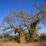 DNA coding Kruger Park's plants