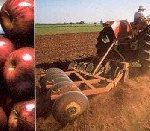 Better season for SA's farmers
