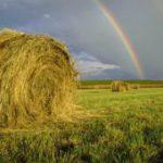 IDC boosts SA's biofuel industry
