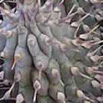 Indigenous plant benefits San