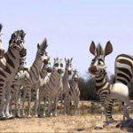 Liam Neeson for SA animated movie