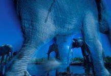 Top award for SA wildlife photographer