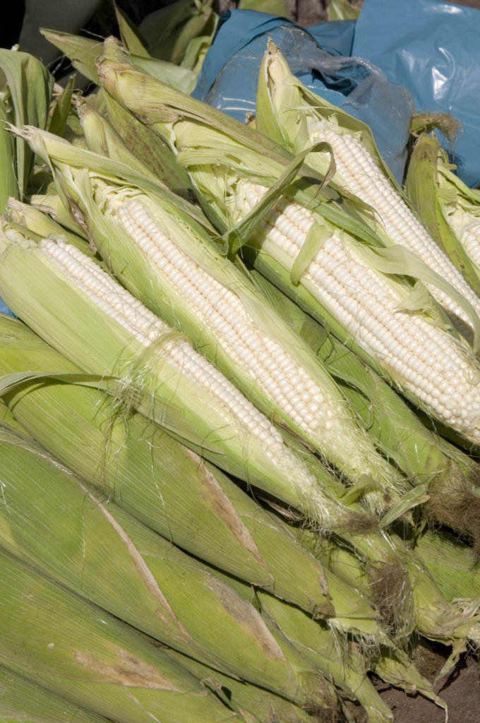 Johannesburg, Gauteng province: Maize cobs