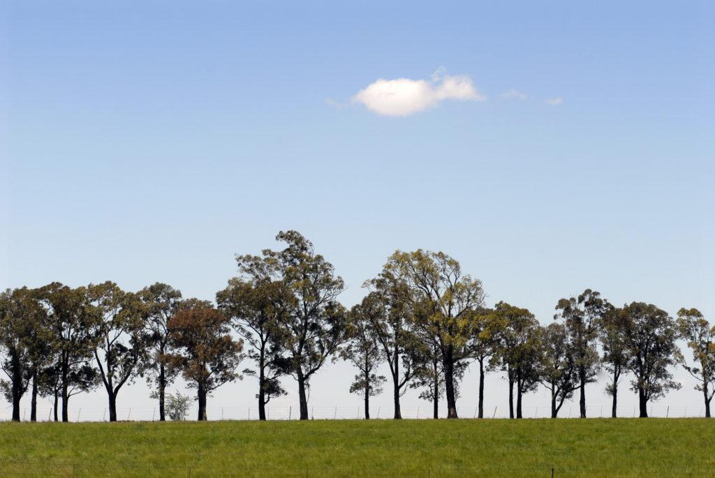 Gauteng province: Rural landscape