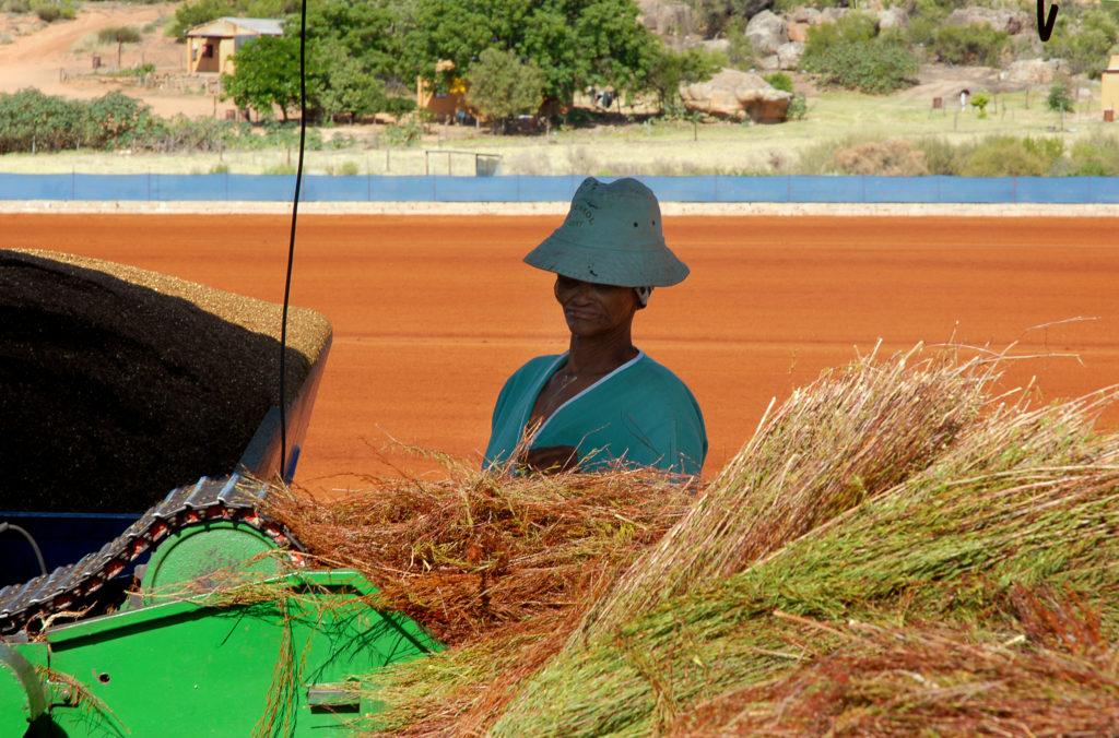 Groenkol Rooibos Farm, Western Cape province