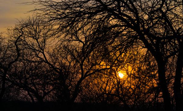 whitelions-sunrise